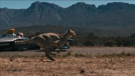 Fur flies as cheetah races electric Formula E car